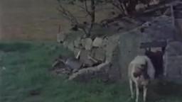 Великолепное старинное зоо кино с послушными животными