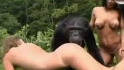 Zoo porn xxx голые извращенки пробуют учинить еблю с гориллой zoo видео