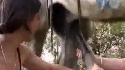 Секс с жеребцом распутницы сосут на лужайке